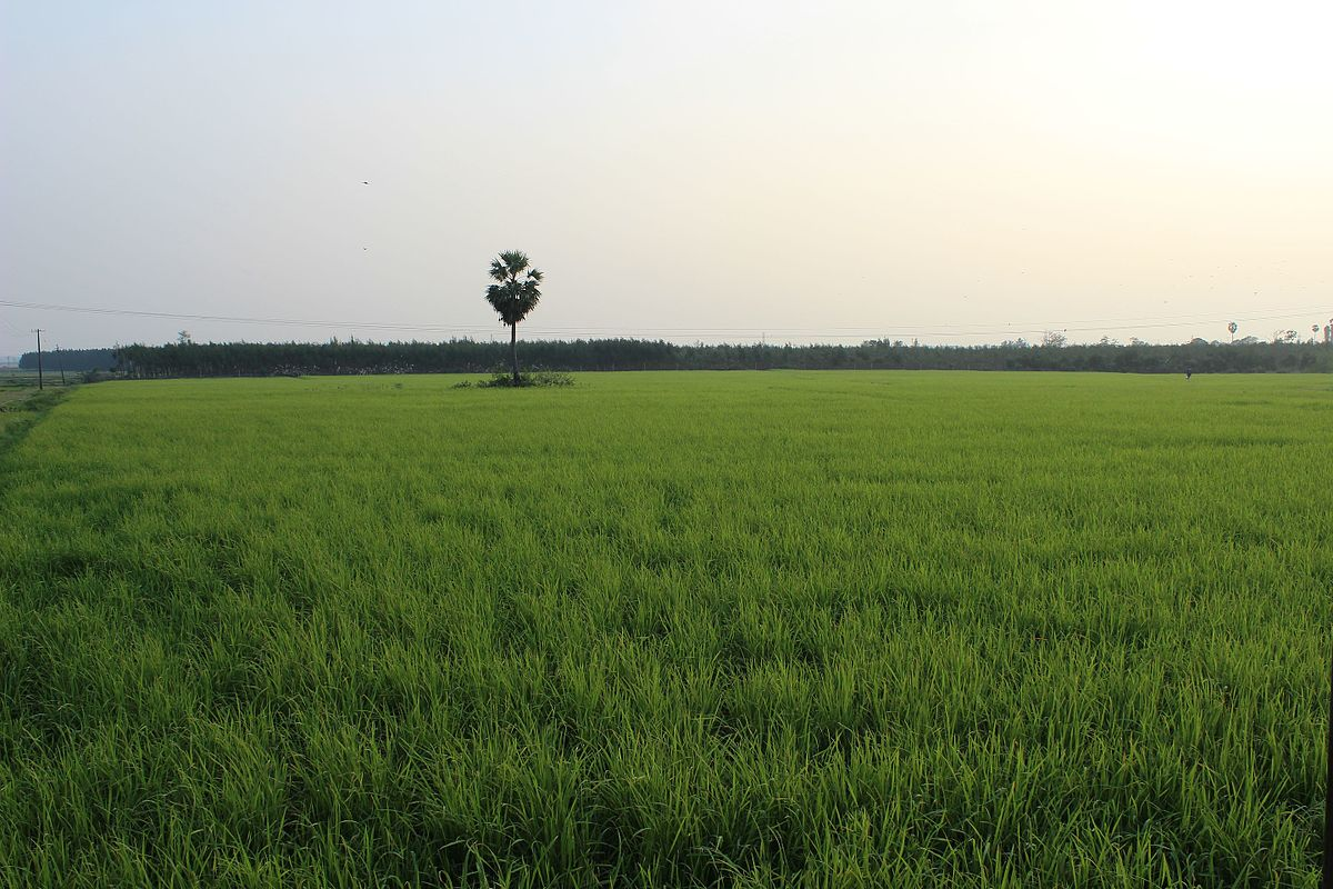35 Acres for Sale in Punjab