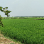 Land for sale Phillaur (8)