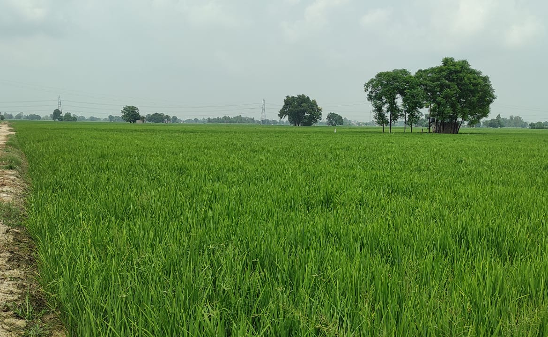 Land for sale on Nakodar Road Phillaur (6)
